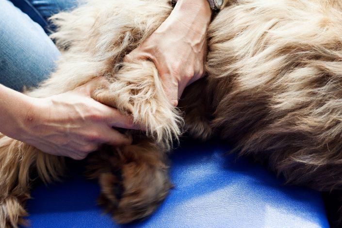 Hundeosteopathie-Ina Hofheinz