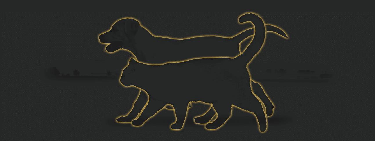 Ina Hofheinz Indikatoren Hund und Katze