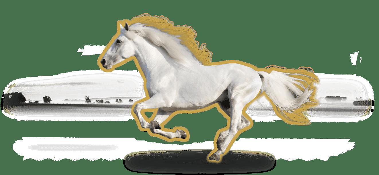 Ina Hofheinz Indikationen für Pferdeosteopathie