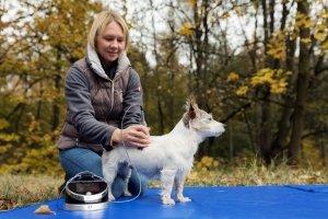 Ina Hofheinz Laserbehandlung Hund