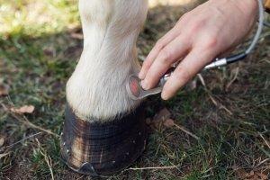 Ina Hofheinz Laserbehandlung Pferd