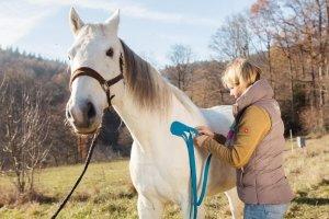 Ina Hofheinz Tierarzt Taping Pferd