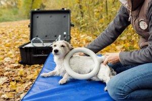 Ina Hofheinz Theracell hochenergetische Impulstherapie Hund