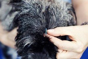 Ina Hofheinz Akupunktur Hund