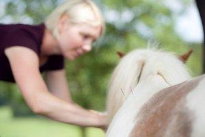 Ina Hofheinz Akupunktur Pferd